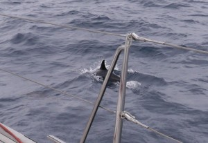 Dolphin to starboard