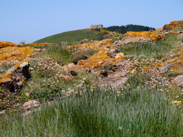 Coastal lichen