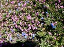 Wildflower carpet, Galicia