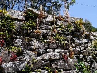 Wall, Camarinas