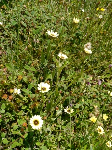 Wildflowers, Galicia