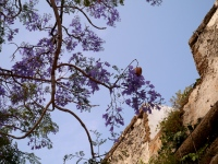 More blossom, by the walls of Cadiz