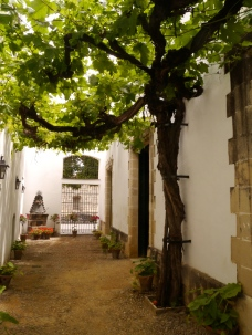 Hundred + year old vine
