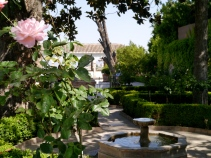 Fountain and rose