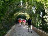 Oleander Tunnel