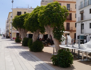 Ibiza town pollards